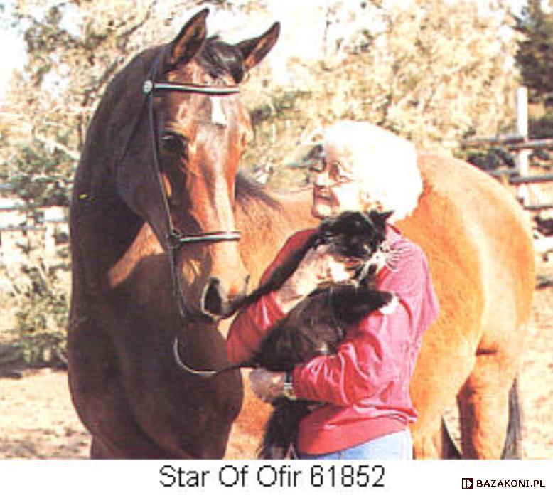 Star of Ofir