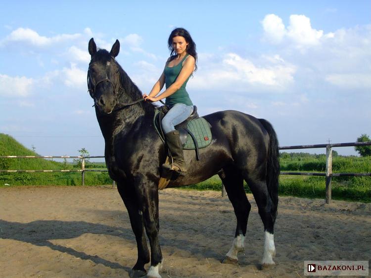 "bazakoni.pl - Horse details - Stallion ""Lider"" [Nefryt ..."